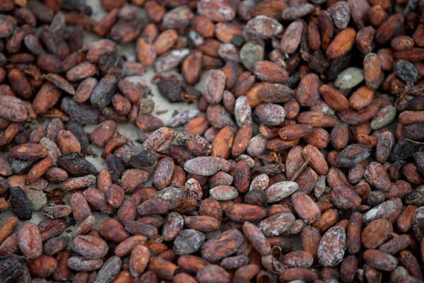 Cacao beans, illustrative stock photo