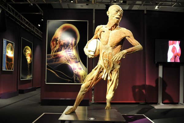 The HUman Body exhibition, Incheba Bratislava 2012