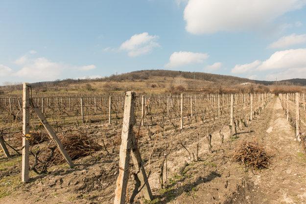 Vineyards of Nové Mesto