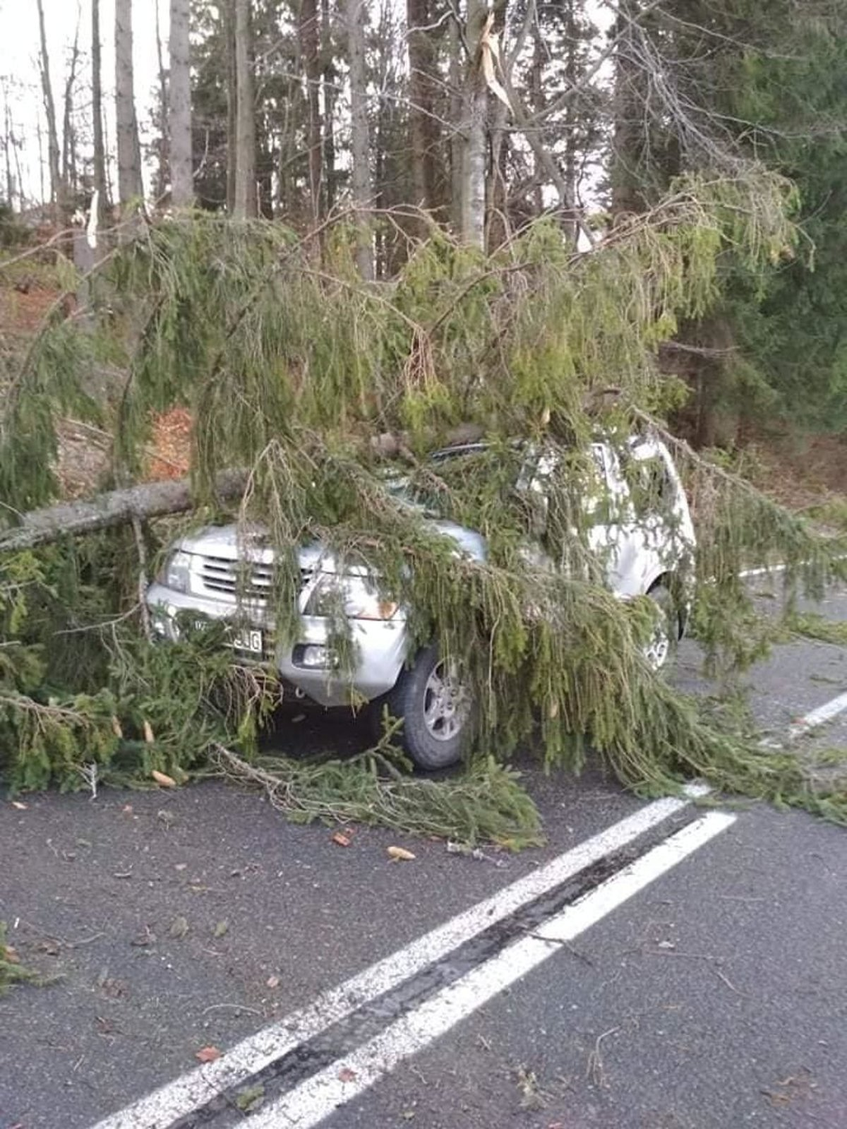 Strong winds knocked down thousands of trees in the Tatras and northern  Slovakia at the end fd624ecd72