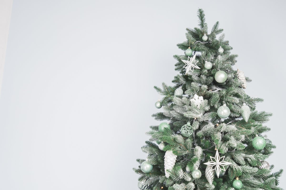 a2dbb13f9655 If you want to have a real Christmas tree