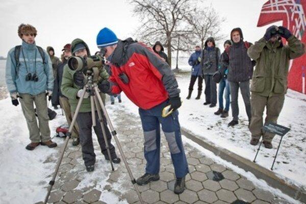 Birdwatching near Bratislava