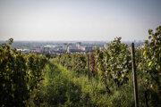 Vinica Tál wineyard