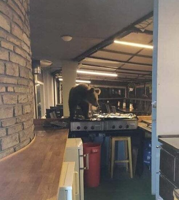 A young bear sighted in the kitchen of a hotel in the High Tatras.