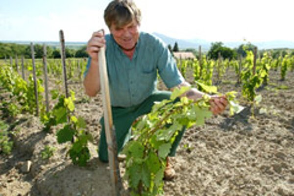 Locals have been fighting for the Tokaj label for more than 40 years