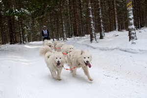 Mushing is popular also among public.