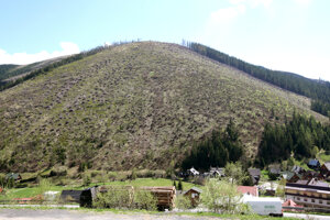 The hill without trees.