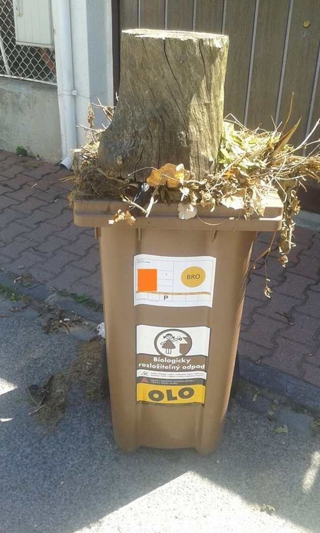 An example of waste, even though it is biowaste, that OLO does not collect. This time due to its size.