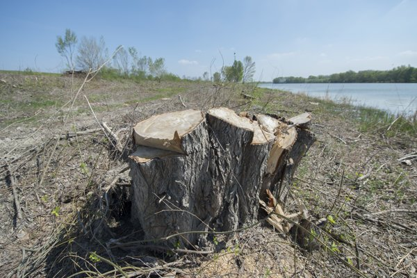 Tree-cutting on the Danube's bank