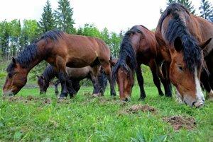 At Muránska Planina horses are bred half-wild.