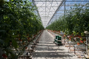 The mining company is already active in other fields and even grows tomatoes.