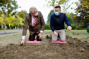 Dutch Ambassador Henk Cor van der Kwast (left) plants tulips with Bratislava Mayor Matúš Vallo on October 21, 2020.