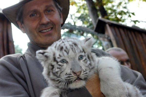 Actor and tiger-cub 'godparent' Ján Kroner with one of the white tiger cubs.