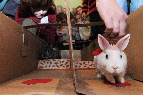 Under starter's orders: thoroughbred racing bunnies