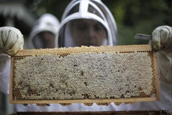 Honey-makers from the Luxembourg Gardens of Paris.