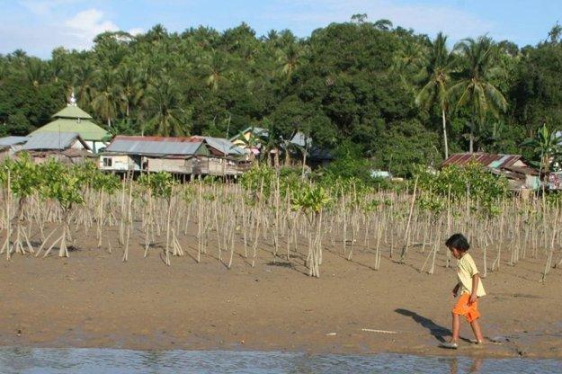 Mangrovy chránia ľudské obydlia pred morskými vlnami.