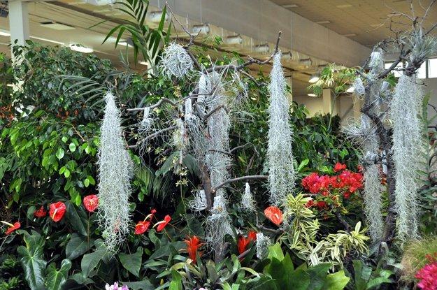 Expozícia Botanickej záhrady SPU na výstave Gardenia
