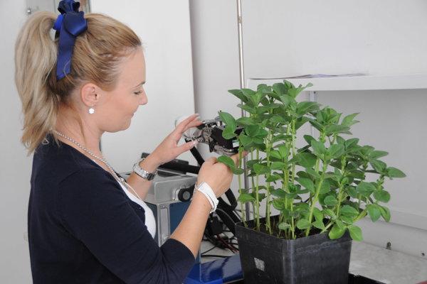 Ľudstvo bude čoraz viac závisieť od rastlín. Ponúkajú človeku stavebný materiál, potravu, stavebné látky a komponenty potrebné pre jeho zdravie