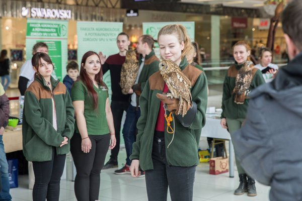 Na Slovenskej poľnohospodárskej univerzite v Nitre funguje sokoliarsky krúžok. Ukážky práce s dravcami sú jednou z mnohých ciest, ako zaujať budúcich študentov aj širokú verejnosť.