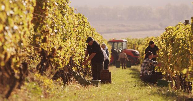 Tokajským cykloexpresom sa môžete odviezť aj na tohtoročné Tokajské vinobranie v Čerhove