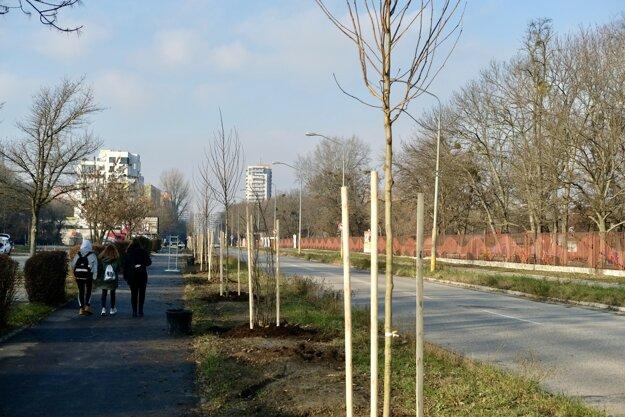 Dokončená alej vedie popri obľúbenej cyklistickej trase pri Dostihovej dráhe.