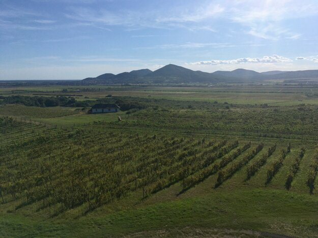 Výhľad z rozhľadne na tokajskú oblasť
