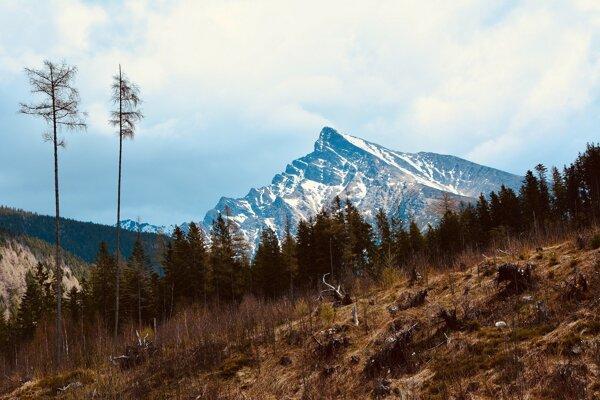 Do ceny Atlas môžete prihlásiť ekologické projekty a iniciatívy naprieč verejnou, mimovládnou, vzdelávacou aj súkromnou sférou na Slovensku.