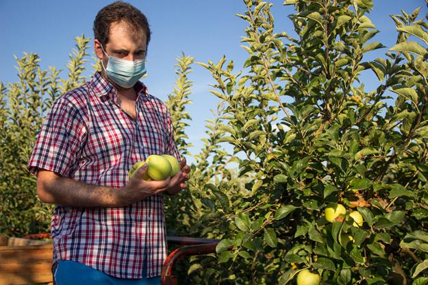 pestovanie ovocia