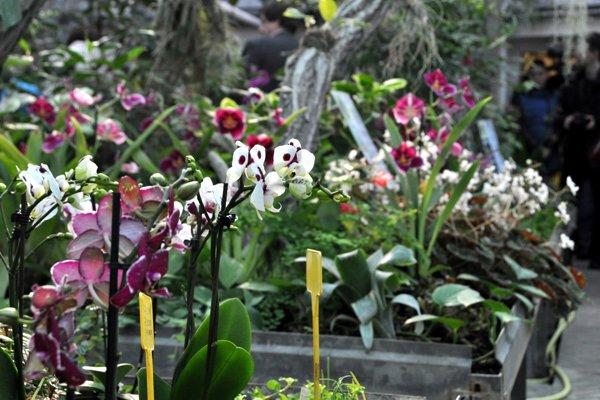 Výstavu orchideí v Botanickej záhrade SPU v Nitre si môžete pozrieť do 11. marca v každý pracovný deň od deviatej do šestnástej hodiny