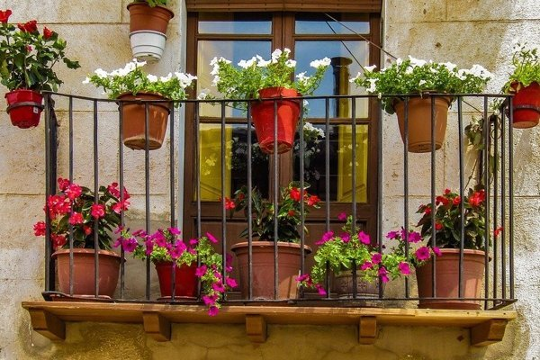 Pestovanie kvetov