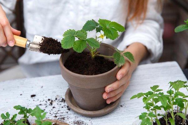 Zasaďte sa o ekologickú budúcnosť.