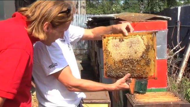 Čo platí na komáre? Iné než na včely