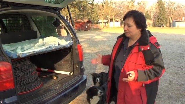 Pes musí mať svoje miesto doma aj v aute