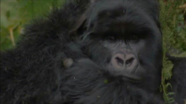 Kto Gorilu nečítal, nech si ju aspoň pozrie