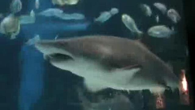 Maďarské žraloky v nákupnom centre