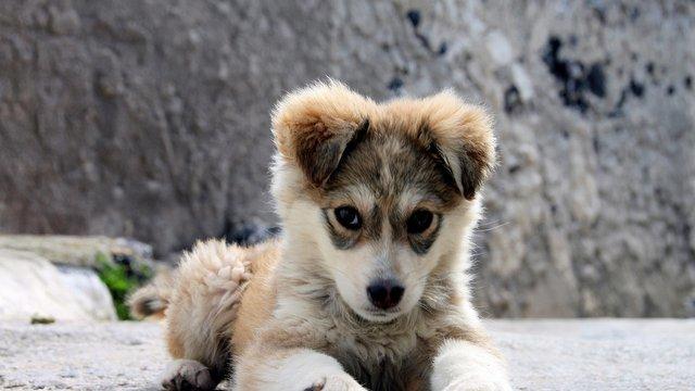 Čo musíte spraviť, keď si domov prinesiete šteniatko